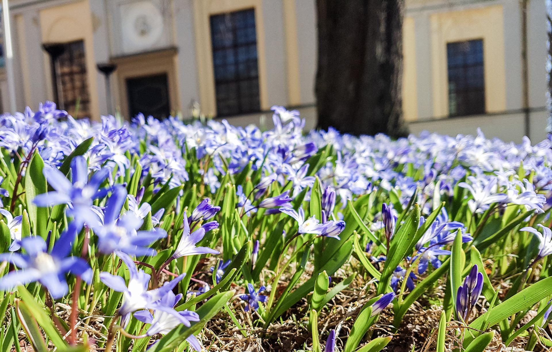 Bild från marken på skillorna i gräsmatten med Kungsholms kyrka i bakgrunden.