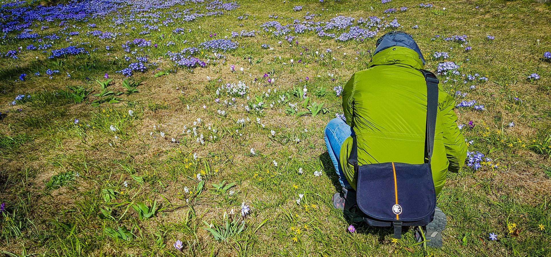 Min kollega Helena fotograferar den gröna gräsmatten som är full av blå skilla